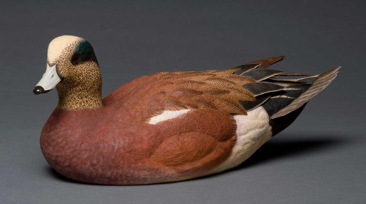 Wigeon duck hen - photo#25